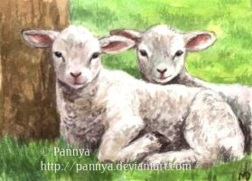 Spring Lambs ACEO by Pannya