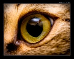 Cat's eye by Eloren