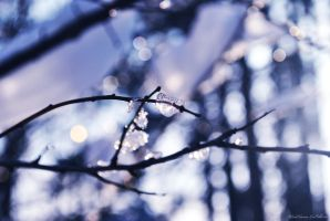 Winter 2012 - 3 by drop-of-imagination