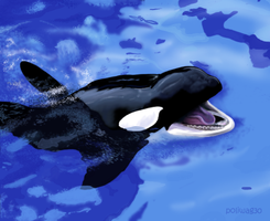 Orca Realism attempt Finished by poliwag30