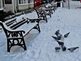 Pigeons in the snow by TashyMcFlashy