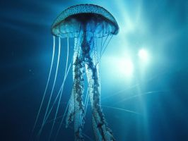 Jellyfish? by peterdigiacomo