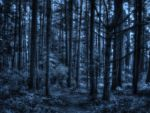 Cerulean Woods by midnightstouchSTOCK