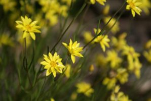 Yellow Flowers Smiling by Delia67