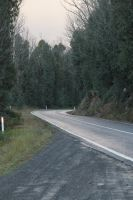 Forrest Road Stock 2 by CNStock