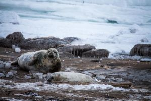Seals Relaxing by steverankin