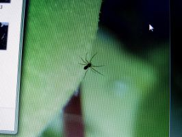 The spider on the screen by eco6org