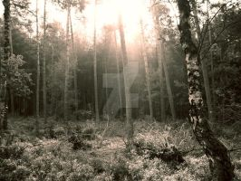 The Gentle Woods by riddlerj