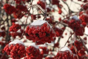 .red winter by InfinityVanity