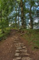 Woodland pathway stock by A68Stock