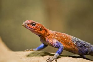 Lizard by homerlein