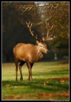 I'm Of To A Stag Do. by andy-j-s