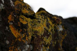 Lichens by jawg1982