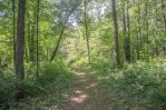 Nature Trail by lyonsc1000