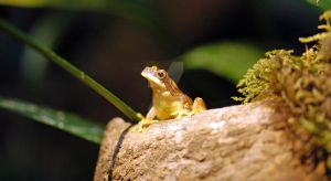 Hourglass Frog 1 by MorrighanGW