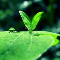 :seed of green: by aendrw