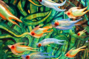 Fish - Detail 271 by Hoon-King