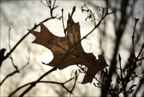 Leaf by CAFLORES