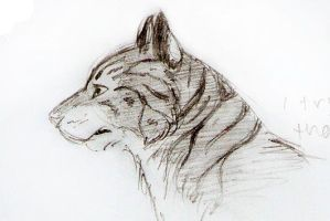 Tiger Sketch by Joava
