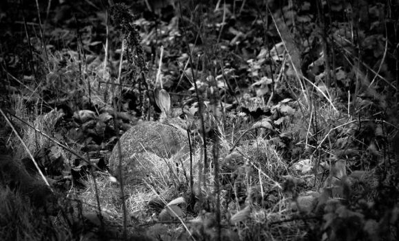 Spot the rabbit by NiallAllen