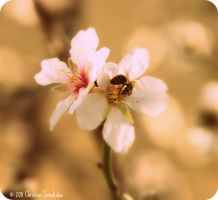 And then came the bees by christinesam