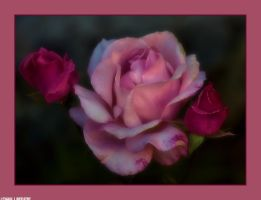 Flowers by my Window by Tigles1Artistry
