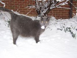 Snow Kitty by Tuftless