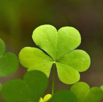 Shamrock by EvaMcDermott