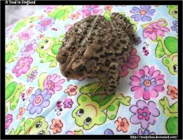 A Toad in Frogland by Toadychan