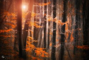 honey leaves by ildiko-neer