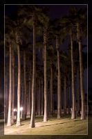 Palm Trees at Night by Delusionist