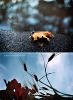 Autunno by Alharaca