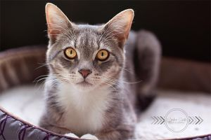 Lounge Kitty by CandiceSmithPhoto