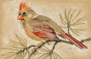 Lady Cardinal by LizMasters