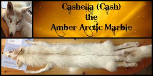 Cashella (Cash) the Amber Arctic Marble by angel-jolie