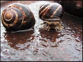 ...two snails by evyto