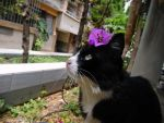 Cat with flower 1 by TheWanderingEarth