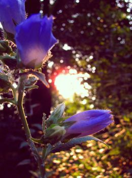 ..first light by Enyalia