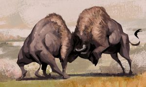 Bison Fighting by AlexAlexandrov