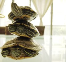 Turtle Tower by happydOrk