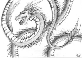 Chinese Dragon by Seikfried