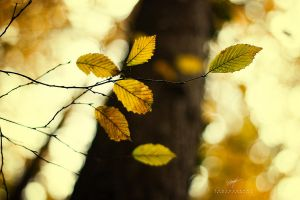 Colors Of Autumn II by DREAMCA7CHER