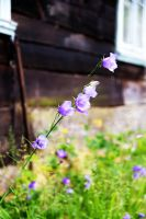 Bluebell by Boria666