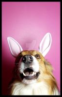 Easter Doggy III. by ElectedTheRejected