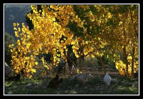 Dance of the yellow by uk-antalya