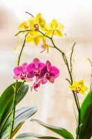 my orchids by Mandy0x