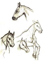 Horse Sketches by LittleNekoma