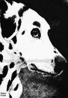 Dalmation in pen by DogGirl17