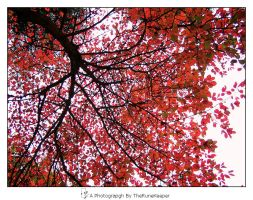 Autumn Leafs 2 by JRose-Photography