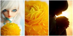 Flower as bright as the sun by ria-photobook